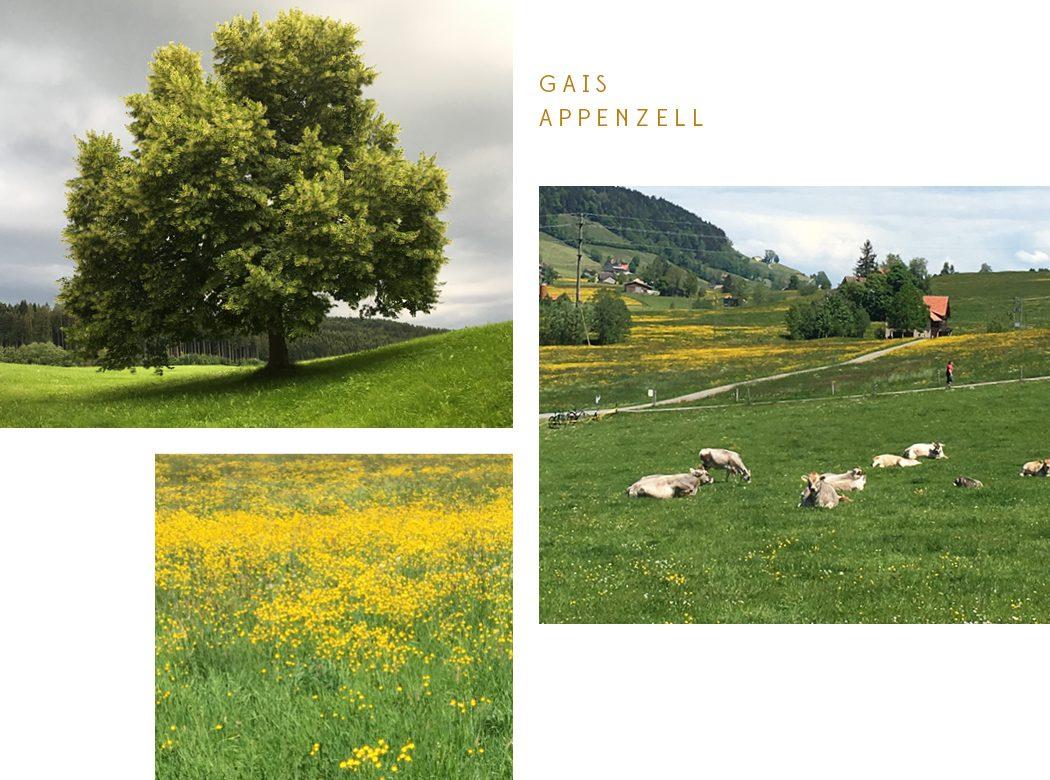 Neue Geomantie - Geomantieausbildung Gais Ostschweiz